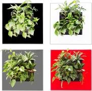 Mobilane LivePicture Go 51,5 x 51,6 x 11,2 cm ohne Pflanzen