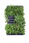 Mobilane LivePanel PACK 2x3 ohne Pflanzen (865x1575mm)